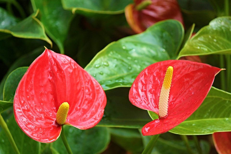 kvetoucí rostlina