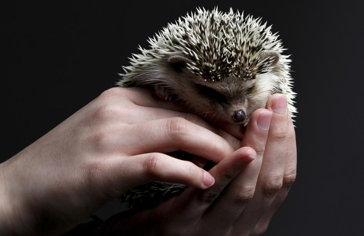 roztomilý ježek